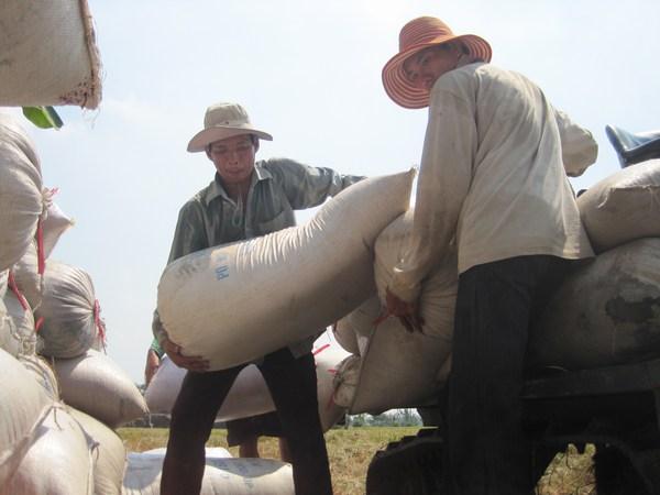 """Năm 2050, đồng bằng sông Cửu Long sẽ """"đói"""" lúa, tôm vì biến đổi khí hậu"""