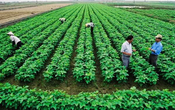 Hàng loạt đại gia quay về với nông nghiệp