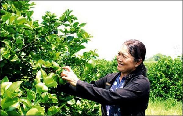 Tỷ phú nông dân với thương hiệu chanh không hạt Vica