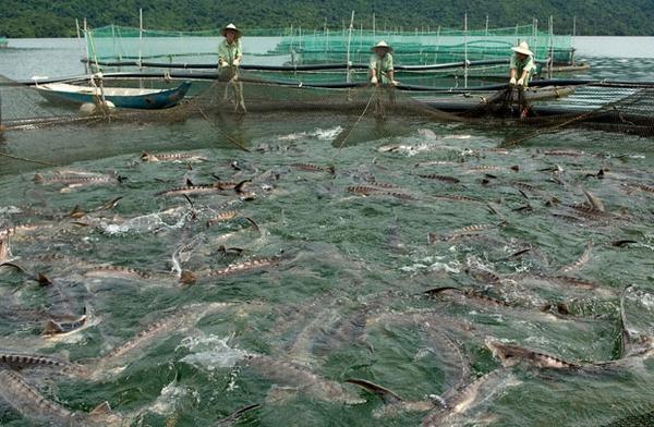 Xuất khẩu thủy sản: Hai vấn đề cần sớm giải quyết
