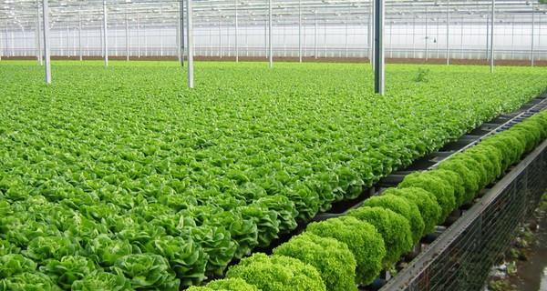 Phát triển thị trường rau quả sạch tại Việt Nam