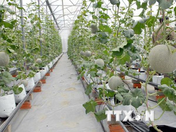 Năm 2020: Việt Nam sẽ có 10 khu nông nghiệp ứng dụng công nghệ cao