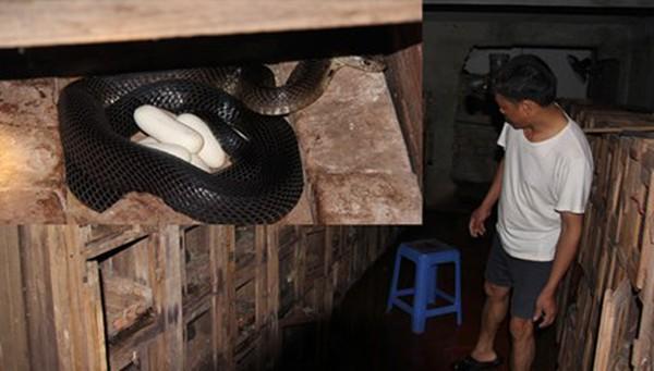 Nỗi lo của làng rắn trăm tỷ
