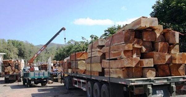 """Nhiều doanh nghiệp gỗ """"chết đứng"""" vì phụ thuộc Trung Quốc"""