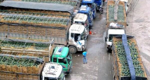 """Dưa hấu Việt """"ế"""": Cần những biện pháp phát triển thị trường"""