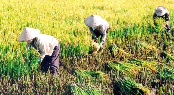 [NGHỀ CỦA TÔI] Mẹ tôi - Người nông dân chân lấm tay bùn