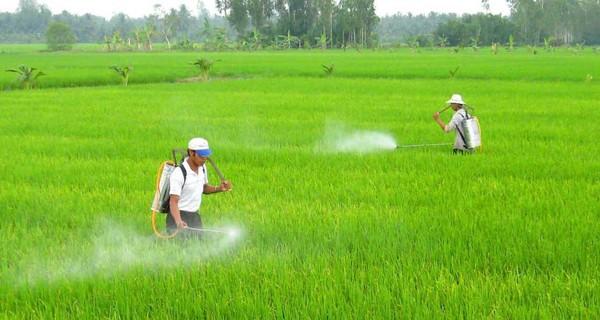 WB: Vì sản lượng, nông dân Việt đã áp dụng quá mức phương thức canh tác không bền vững