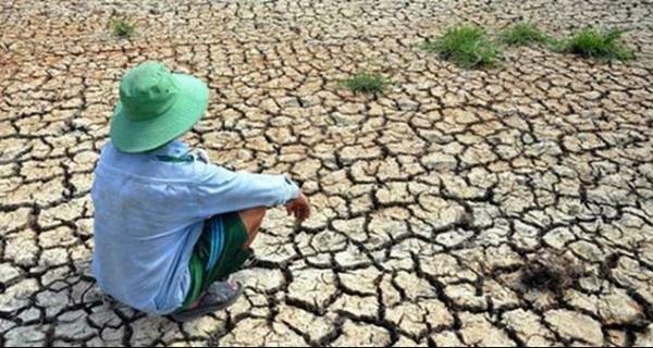 Hạn hán, nhiễm mặn gây thiệt hại hơn 15.000 tỷ đồng