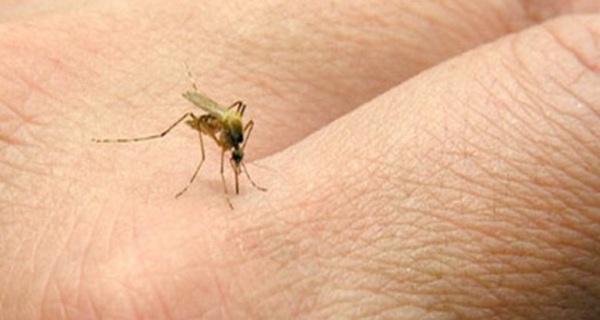Đây là lý do tại sao muỗi chỉ đốt một số người nhất định