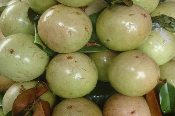 6 loại quả thuần Việt không bao giờ nhập khẩu từ Trung Quốc