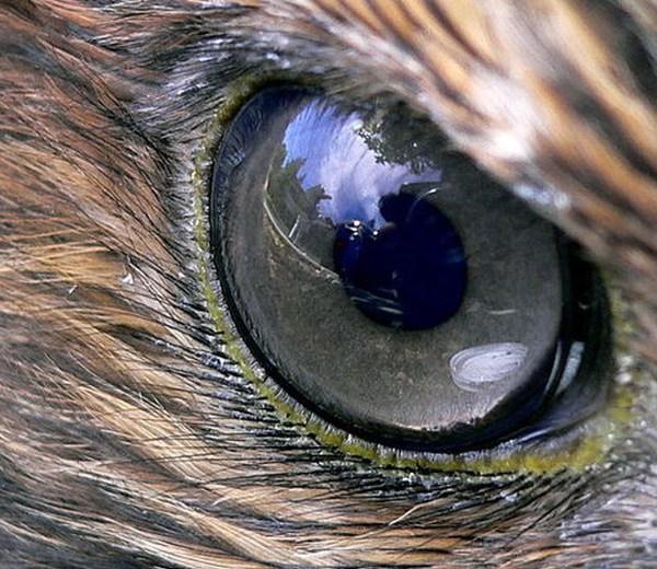 10 khả năng phi thường độc nhất vô nhị ở giới động vật mà con người mơ ước