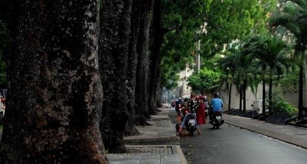 TP.HCM: Quyết định di dời, đốn hạ 300 cây xanh trên đường Tôn Đức Thắng