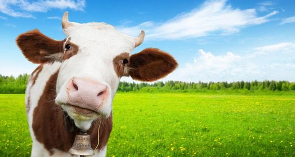 Nếu bạn và tôi không ăn thịt, thế giới này sẽ ra sao?