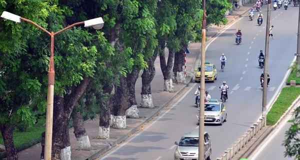 Chùm ảnh: Ngắm hàng cây cổ thụ xanh ngút mắt ở phố Kim Mã trước ngày di dời