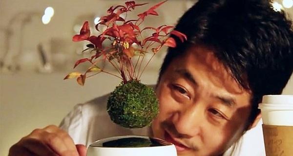 Nhật Bản gây sửng sốt với phát minh cây bonsai biết bay