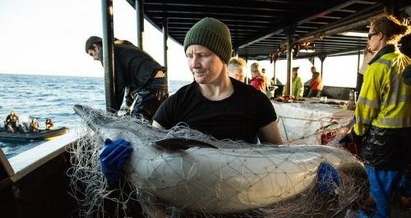 El Nino làm giảm mạnh sản lượng cá ở Thái Bình Dương và Trung Mỹ