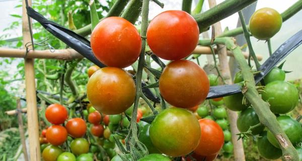 Ai cũng muốn ăn nông sản sạch, người nông dân phải làm sao?