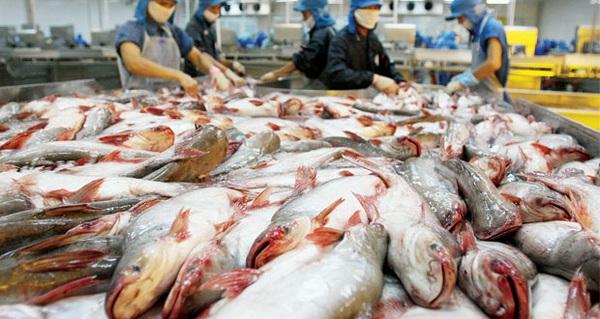 """Thủy sản Hùng Vương có còn là """"ngôi sao cá tra""""?"""