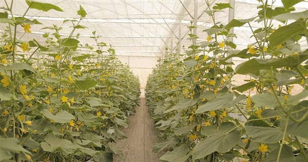 Khám phá nông trại sản xuất rau sạch thông minh nhất Việt Nam