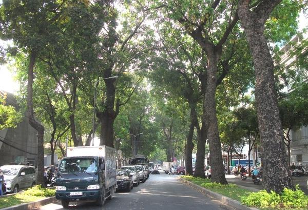 300 cây xanh cổ thụ giữa trung tâm sắp bị đốn hạ, dân Sài Gòn tiếc nuối