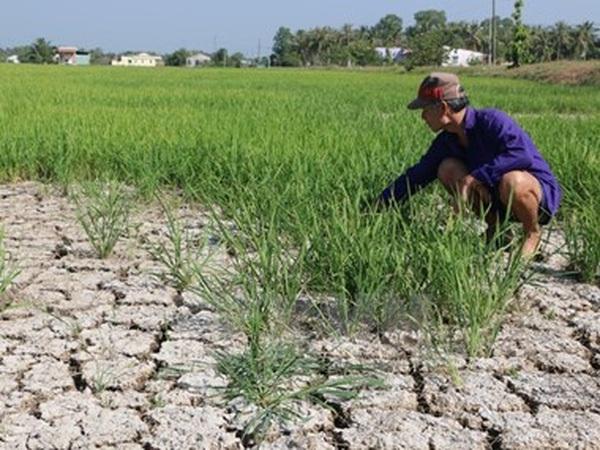 Nam Trung Bộ và Tây Nguyên mất 42.000ha cây trồng do hạn hán
