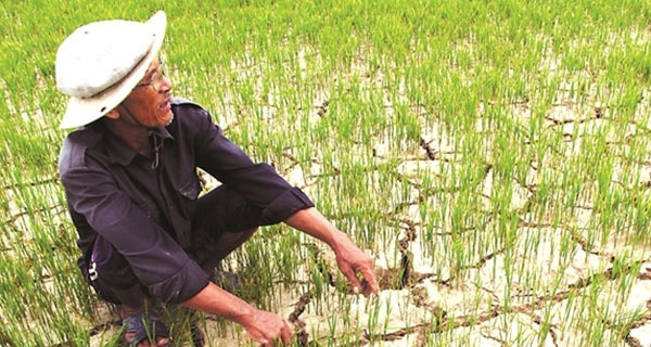 """Khủng hoảng sông Mekong và hạn hán """"bóp nghẹt"""" ruộng lúa Việt Nam"""