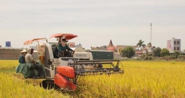 Vì sao người Việt lại chọn gạo Campuchia?