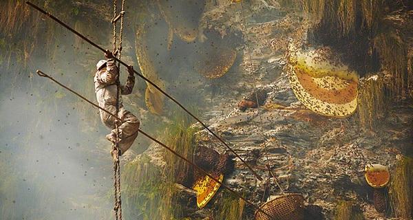 Bán mạng mưu sinh bằng nghề lấy mật ong trên nóc nhà thế giới