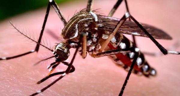 Phát hiện về muỗi vằn mang virus Zika lưu hành ở Việt Nam