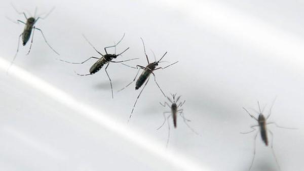 Lập 8 đoàn kiểm tra phòng chống dịch do virút zika