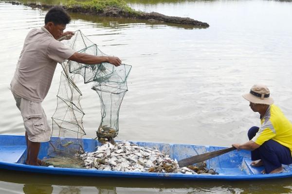 Cá tra mất giá, tôm mất mùa, nông dân Nam Bộ bỏ ao thu lưới
