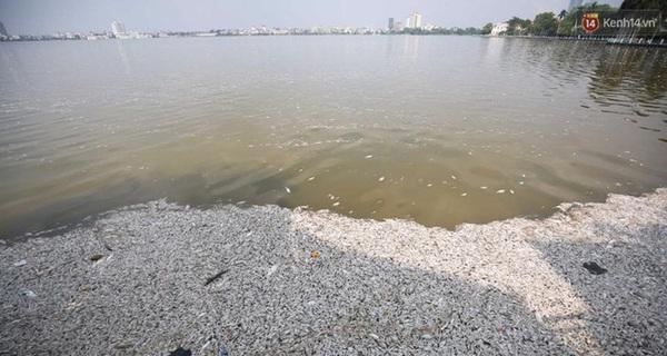 Hồ Tây đang là nạn nhân của 4.000 m3 nước thải do người dân Hà Nội xả ra mỗi ngày