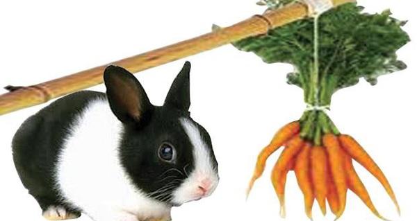 Câu chuyện thỏ & cà rốt: Đừng tưởng thưởng hậu hĩnh cho nhân viên là tốt, làm sai cách vừa tốn tiền vừa hại công ty!