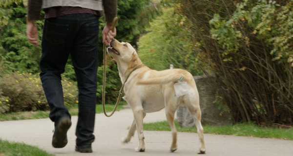 Tìm ra cách giữ vệ sinh cho chó vừa sạch, vừa hạn chế phải dùng tay, anh chàng này kiếm được ngay 300 triệu