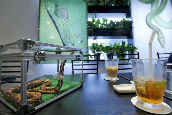 Quán cafe rắn hút khách ở Nhật Bản