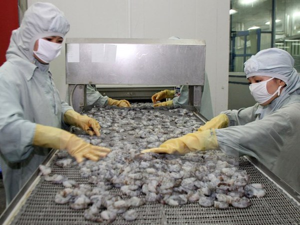 EU cảnh báo 11 lô hàng thuỷ sản của Việt Nam bị dư kim loại nặng