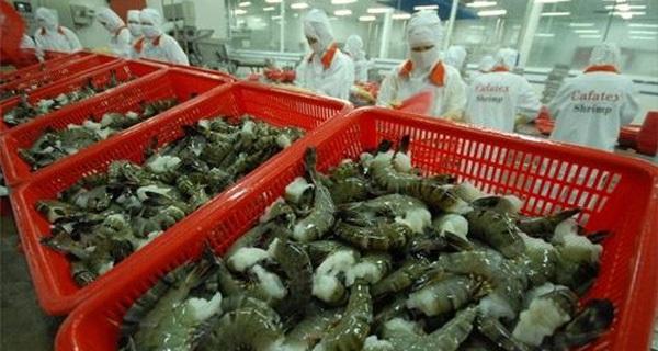 Nguy cơ mất thị trường xuất khẩu tôm