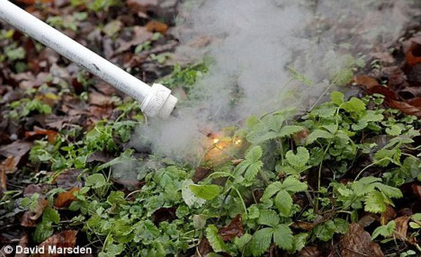 FAO và WHO: Thuốc diệt cỏ Glyphosate không gây ung thư qua đường ăn uống