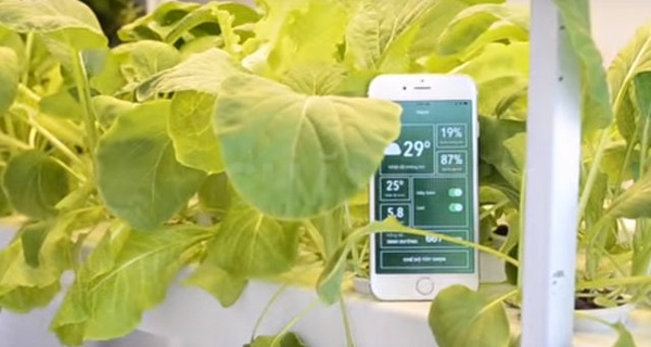 Khởi nghiệp trồng rau sạch chỉ bằng 1 chiếc smartphone