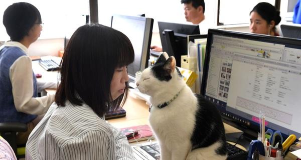 """Để giảm áp lực làm việc, nhiều công ty Nhật Bản đã tìm tới những """"nhân viên 4 chân"""" như chó, mèo, dê…"""