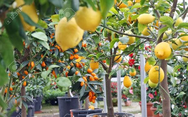 Vỏ và hạt cam: Nguồn cảm hứng kinh doanh ở Sicily