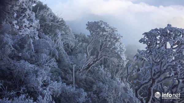 Nhiệt độ xuống âm 7 độ C, đỉnh Fansipan phủ trắng băng tuyết