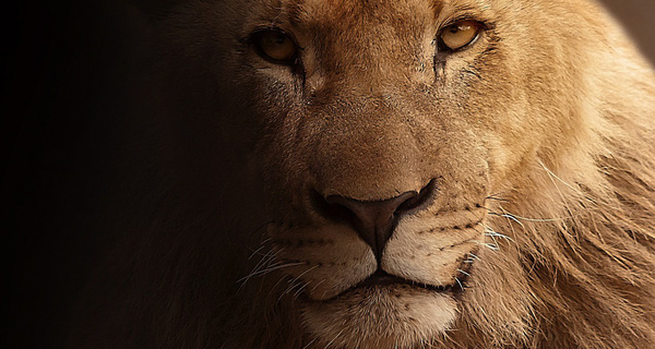 Người giỏi cũng giống như sư tử, là chúa sơn lâm rồi thì chẳng cần gì phải khoe khoang, chẳng cần chứng tỏ