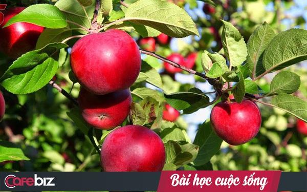 Câu chuyện kinh doanh trái táo và bài học dành cho bất cứ ai đang có ý định khởi nghiệp