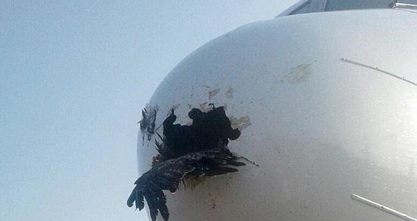 Điều gì xảy ra khi một chú chim đâm vào máy bay?