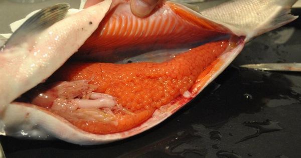 Một thứ trong bụng cá dinh dưỡng cao hơn thịt cá lại bổ não, không phải ai cũng biết