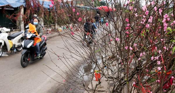 Người dân Hà Nội bỏ tiền triệu mua hoa lê trắng, đào rừng dịp Rằm tháng Giêng
