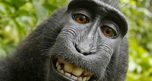 """Nhiếp ảnh gia bị kiện đến phá sản vì bức hình """"Chú khỉ selfie"""" và lý do không ai ngờ tới"""