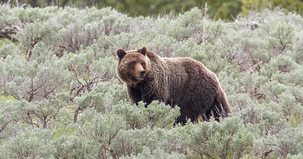 Chuyện 2 bác lái bán da gấu khi... chưa săn được và bài học đắt giá cho dân sales