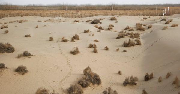 Một thành viên APEC đã làm nên kỳ tích: Biến 200ha sa mạc thành đồng xanh!
